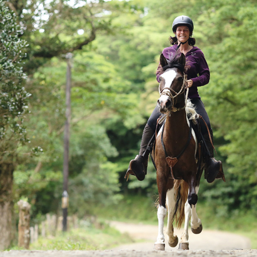 horseback riding tours Monteverde