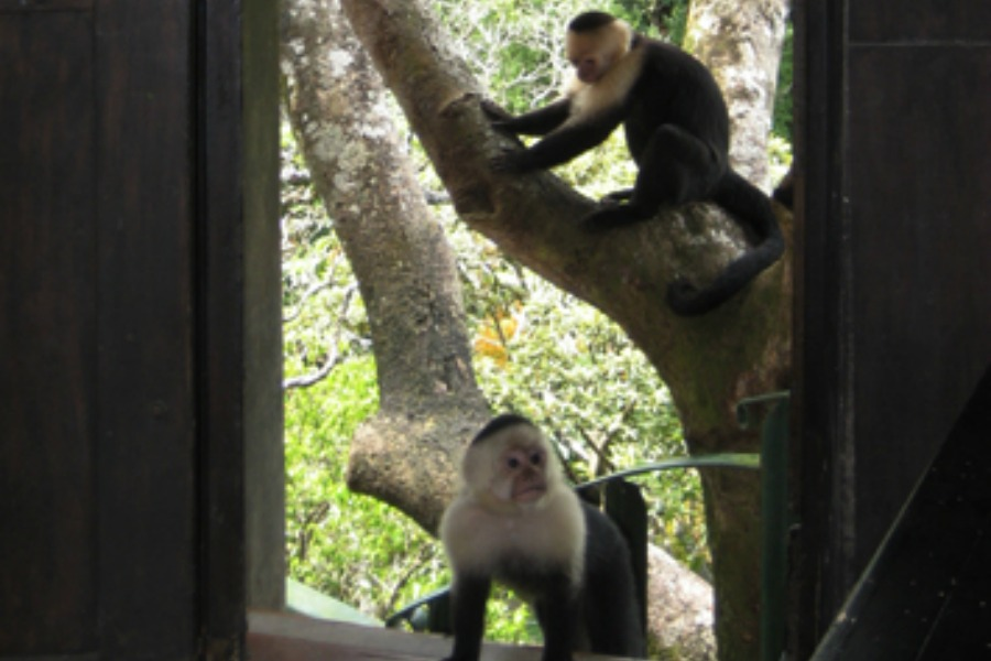 TreeTop House Monkey Visit